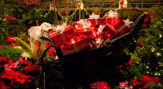 Christmas Floral Showhouse