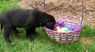 Dog-Easter